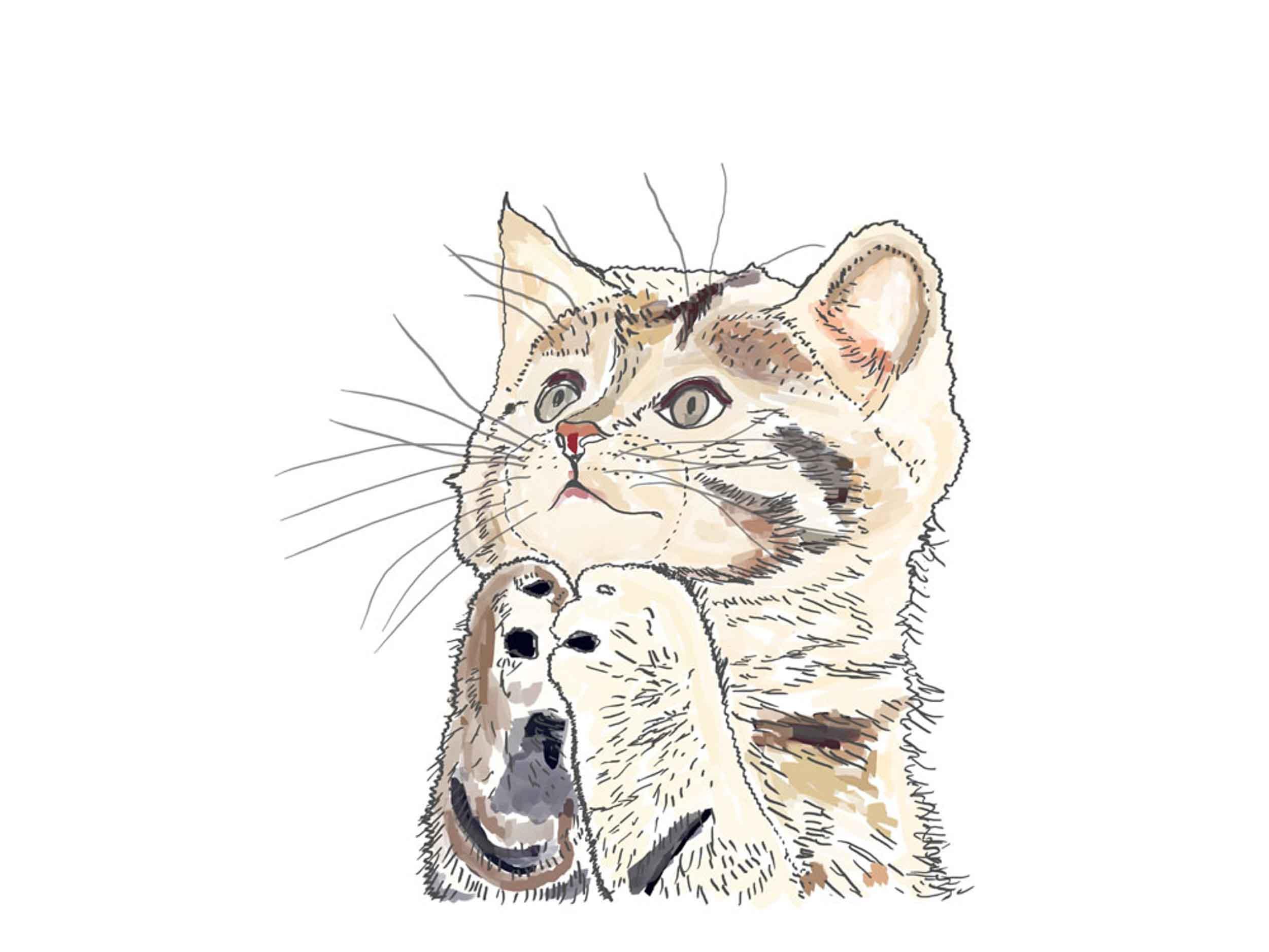 cute-cat-1