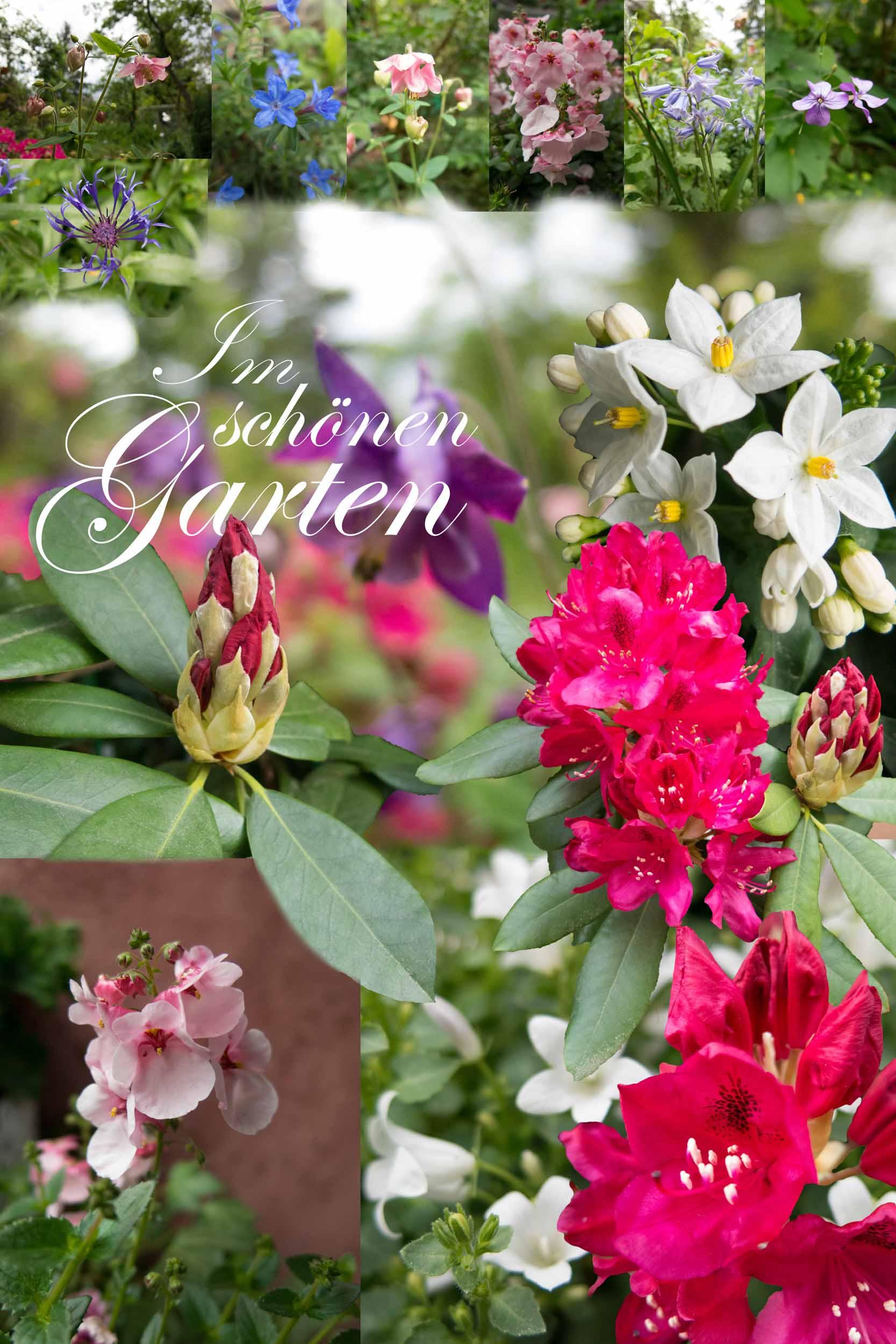 Poster mit Collage von schönen Blumen aus einem Garten