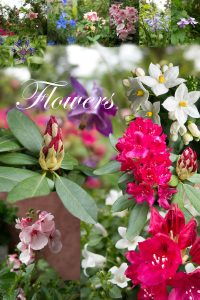 Poster: Flowers
